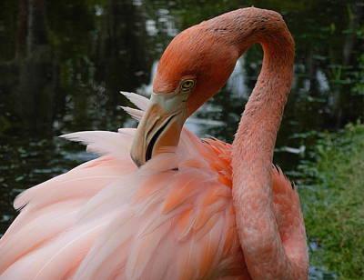 Flamingo Feathers Art Print by Amanda Vouglas
