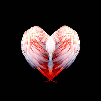 Digital Art - Flamingo Feathers Love Special Edition by Mandy Elliott