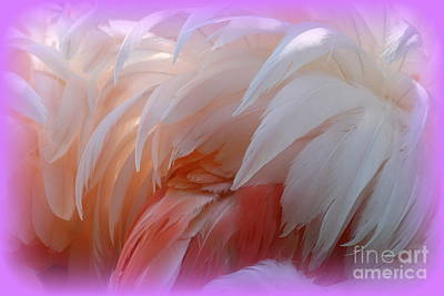 Photograph - Flamingo Feathers by Rick Rauzi
