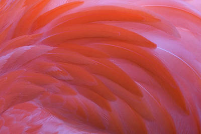 Photograph - Flamingo Flow 3 by Michael Hubley