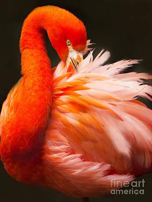Flamingo Fluff Print by Joan McCool