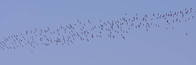 Photograph - Flamingo Fly Over by Ernie Echols