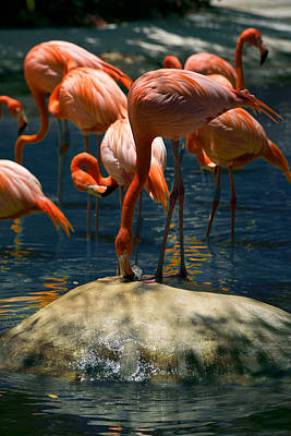Photograph - Flamingo Fountain by Lawrence Boothby