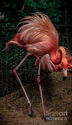 Photograph - Flamingo Glory by Toma Caul