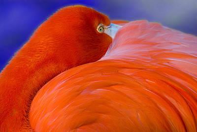 Photograph - Flamingo by Harry Spitz