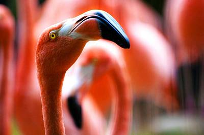 Birds Royalty-Free and Rights-Managed Images - Flamingo Head by Happy Home Artistry