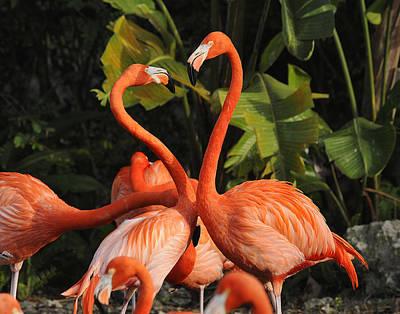 Flamingo Heart Art Print by Keith Lovejoy