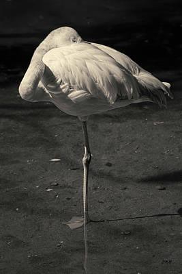 Photograph - Flamingo I Toned by David Gordon
