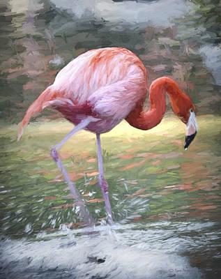 Flamingo Iv Original