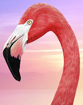 Birds Drawings Rights Managed Images - Flamingo Royalty-Free Image by J Olson LaF