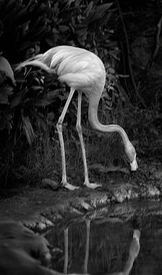 Photograph - Flamingo Lake, Film Finish by Maria Reverberi