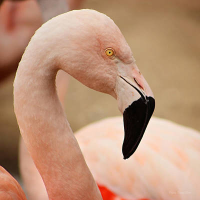 Photograph - Flamingo Left by Deana Glenz