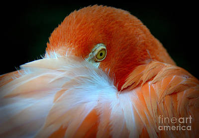 Photograph - Flamingo by Lisa L Silva