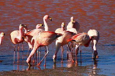 Ornithology Photograph - Flamingo by Mark Nowoslawski