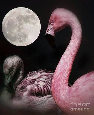 Photograph - Flamingo Moon  by Toma Caul