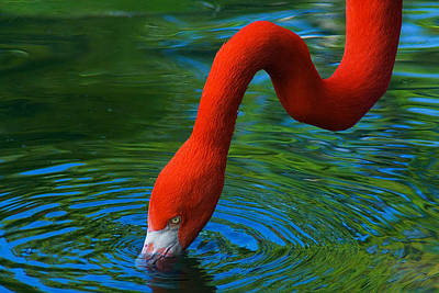Photograph - Flamingo Neck by Harry Spitz
