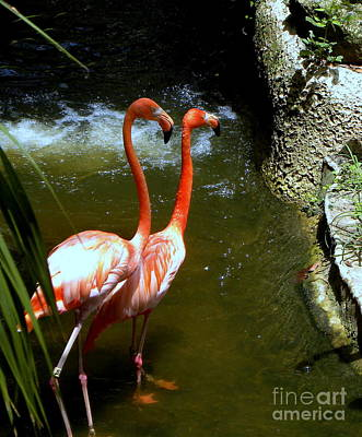 Flamingo Pair Art Print