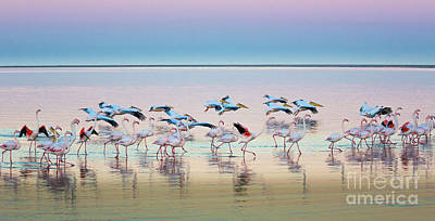 Marching Photograph - Flamingo Panorama by Inge Johnsson