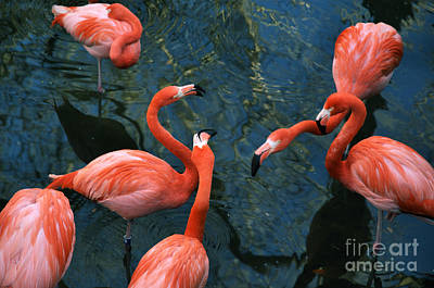 Photograph - Flamingo Party 1 by Kathi Shotwell