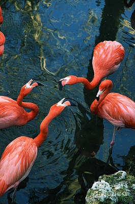 Photograph - Flamingo Party 2 by Kathi Shotwell