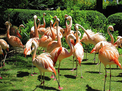 Art Print featuring the photograph Flamingo Party by Tammy Sutherland