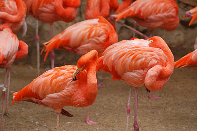 Flamingo Party Art Print by Teresa Blanton