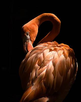 Flamingo Art Print by Patrick  Flynn