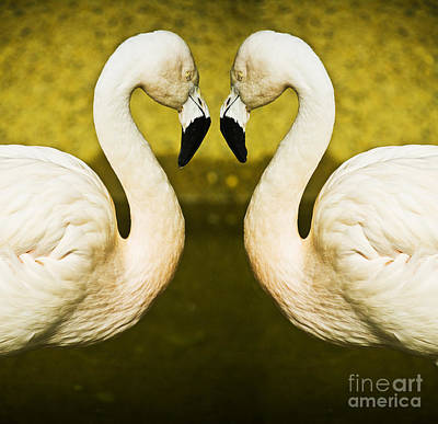 Birds Royalty-Free and Rights-Managed Images - Flamingo reflection by Sheila Smart Fine Art Photography
