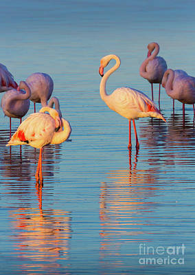 Marching Photograph - Flamingo Reflections by Inge Johnsson