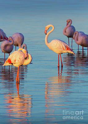 Flamingos Photograph - Flamingo Reflections by Inge Johnsson