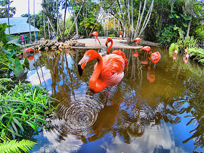 Photograph - Flamingo Series Gopr1835 by Carlos Diaz