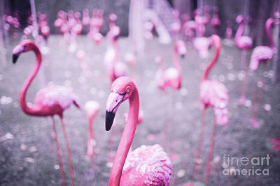Pink Flamingo Nature Photograph - Flamingo by Setsiri Silapasuwanchai