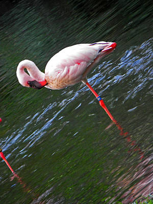 Photograph - Flamingo Style by Elizabeth Hoskinson