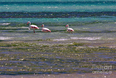Photograph - Flamingoes At Magaruque by Jeremy Hayden