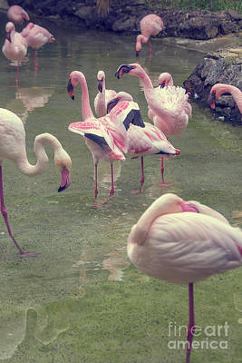 Photograph - Flamingoes by Patricia Hofmeester
