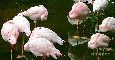 Photograph - Flamingos 10 by Randall Weidner