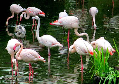 Photograph - Flamingos 3 by Randall Weidner