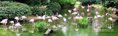 Photograph - Flamingos 4 by Randall Weidner