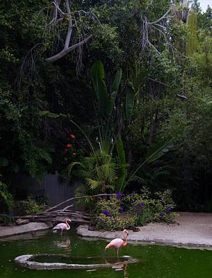 Photograph - Flamingos 4 San Diego Zoo by Phyllis Spoor