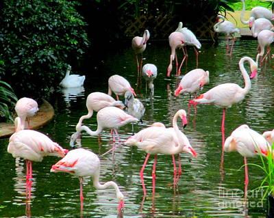 Photograph - Flamingos 6 by Randall Weidner