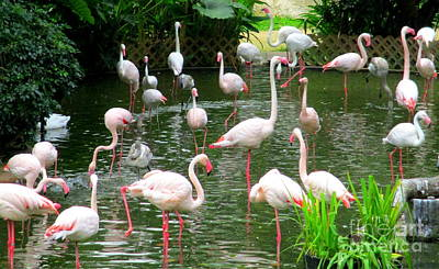 Photograph - Flamingos 9 by Randall Weidner