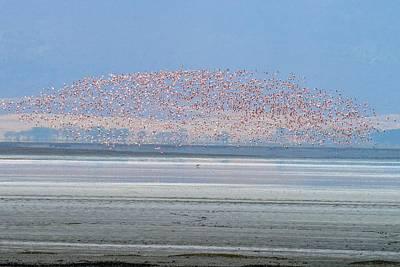 Photograph - Flamingos And Golden Jackal In Tanzania by Marilyn Burton