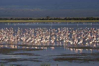 Photograph - Flamingos At Amboseli by Michele Burgess