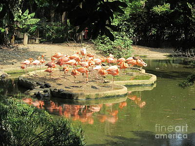 Flamingos At Morning Original