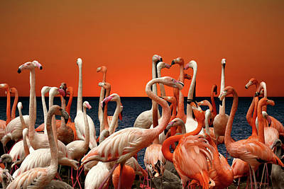Photograph - Flamingos At The Cape by Ericamaxine Price
