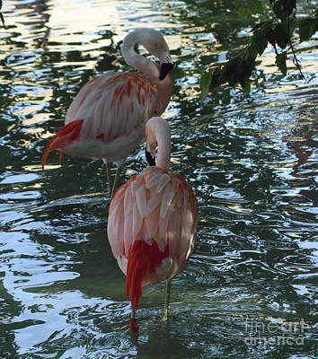 Photograph - Flamingos by Brenda Thour