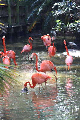 Flamingos Art Print by Diane Merkle