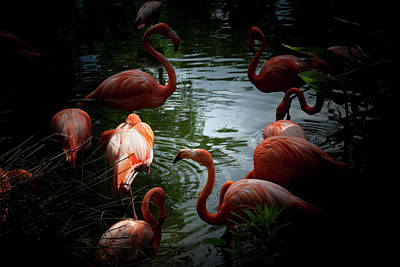 Photograph - Flamingos by Eric Christopher Jackson