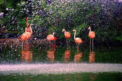 Impressionism Photos - Flamingos II by Susanne Van Hulst