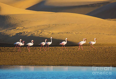 Reflective Photograph - Flamingos In The Sand Dunes by Inge Johnsson